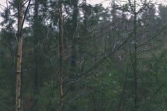 de naakte takken van de berkboom in de herfst tegen donkere achtergrond - vi Royalty-vrije Stock Fotografie