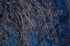 De naakte takken van bomen Stock Fotografie
