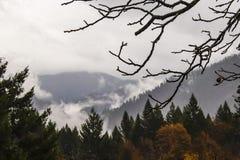 De naakte takken van een okkernootboom met waterdalingen in de regen komen grimmig tegen de herfstgebladerte en nevelige bergen d royalty-vrije stock afbeeldingen