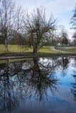 De naakte van het het Water Openluchtpark van de Boombezinning Blauwe Vreedzame Achtergrond Royalty-vrije Stock Afbeeldingen