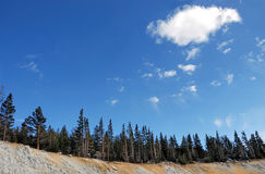 De naaldbomen op Mt. namen toe stock fotografie