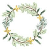 De naaldboomtakken van de Kerstmiskroon royalty-vrije stock afbeeldingen