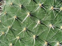 De naalden van de cactus Stock Foto's