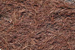 De naalden van de pijnboom Royalty-vrije Stock Fotografie