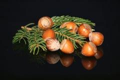 De naaldstilleven van de eikel & van de pijnboom Royalty-vrije Stock Foto