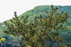 De nabijheid van het Mangush-Plateau royalty-vrije stock fotografie