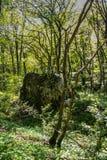 De nabijheid van het Mangush-Plateau stock afbeeldingen