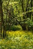 De nabijheid van het Mangush-Plateau royalty-vrije stock foto
