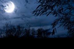 De nacht van de herfst stock foto's