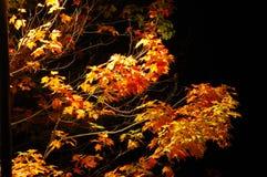 De nacht van de herfst Stock Fotografie