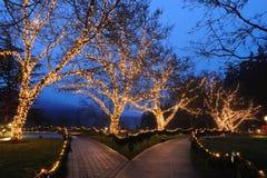 De nacht van de tuin royalty-vrije stock afbeelding