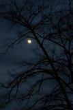 De nacht van de winter royalty-vrije stock foto's