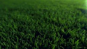 De nacht van het het stadiongazon van de gebiedsvoetbal stock footage