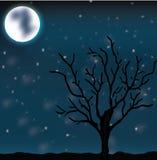 De nacht van de maan Royalty-vrije Stock Afbeelding