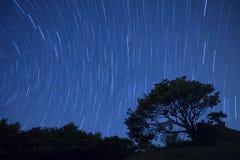 De nachthemel van de stersleep met boom, Hong Kong Stock Foto