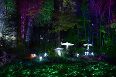 De nachtlichten tonen `-Inspiratie ` in Ostankino-het park van de tuinstad Honderden lichten in het bos die 3d licht en laserillu Stock Foto's