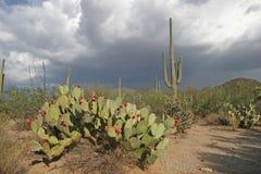 De naderbij komende Wolken van de Regen - Woestijn Sonora Stock Foto