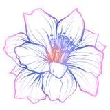 De Narcis van de bloemknop is een seizoengebonden bloem Het tuinieren Stock Foto
