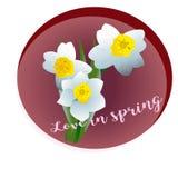 De Narcissen van de de lentebloem Stock Foto's
