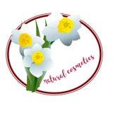De narcissen van de de lentebloem voor schoonheidsmiddelenembleem Stock Fotografie