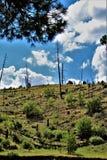 De Nationale Bossen van Apachesitgreaves, Arizona, Verenigde Staten royalty-vrije stock foto