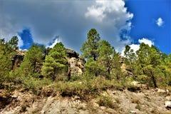 De Nationale Bossen van Apachesitgreaves, Arizona, Verenigde Staten royalty-vrije stock fotografie
