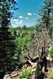 De Nationale Bossen van Apachesitgreaves, Arizona, Verenigde Staten stock afbeelding