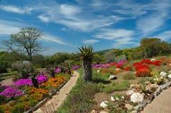 De Nationale Botanische Tuin van Kirstenbosch Stock Afbeeldingen