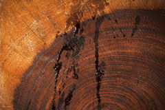 De natte donkere achtergrond van de Californische sequoiatextuur Stock Foto