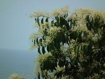 De natuurlijk bloem in de wildernisberg Stock Foto