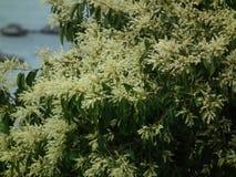 De natuurlijk bloem in de wildernisberg Royalty-vrije Stock Afbeeldingen