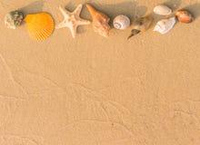 De natuurlijke Achtergrond Het strand en de zeeschelpen Royalty-vrije Stock Afbeeldingen
