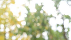 De natuurlijke achtergrond van defocused groen en geel gebladerte stock videobeelden