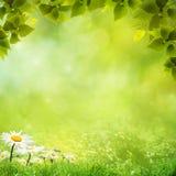 De natuurlijke achtergronden van de schoonheid stock illustratie