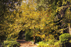 De natuurlijke boog van boom vertakt zich in het de herfstpark Stock Foto