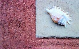 De natuurlijke bouw met shell in Estland royalty-vrije stock fotografie