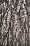 De natuurlijke donkere boom en de houten oppervlaktetextuur of de achtergrond in uitstekende, donkere of enge stijl Stock Fotografie