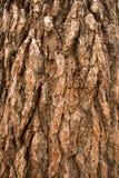 De natuurlijke donkere boom en de houten oppervlaktetextuur of de achtergrond in uitstekende, donkere of enge stijl Royalty-vrije Stock Afbeelding