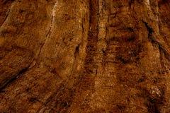 De natuurlijke donkere boom en de houten oppervlaktetextuur of de achtergrond in uitstekende, donkere of enge stijl Royalty-vrije Stock Afbeeldingen