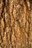 De natuurlijke donkere boom en de houten oppervlaktetextuur of de achtergrond in uitstekende, donkere of enge stijl Stock Foto