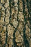 De natuurlijke donkere boom en de houten oppervlaktetextuur of de achtergrond in uitstekende, donkere of enge stijl Royalty-vrije Stock Foto's