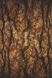 De natuurlijke donkere boom en de houten oppervlaktetextuur of de achtergrond in uitstekende, donkere of enge stijl Royalty-vrije Stock Fotografie
