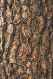De natuurlijke donkere boom en de houten oppervlaktetextuur of de achtergrond in uitstekende, donkere of enge stijl Stock Afbeeldingen