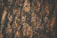 De natuurlijke donkere boom en de houten oppervlaktetextuur of de achtergrond in uitstekende, donkere of enge stijl Stock Afbeelding