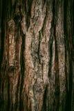 De natuurlijke donkere boom en de houten oppervlaktetextuur of de achtergrond in uitstekende, donkere of enge stijl Royalty-vrije Stock Foto
