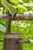 De natuurlijke ecologie drinkt water uit bosbron Stock Foto's