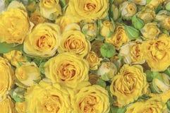 De natuurlijke gele achtergrond van de het boeketdecoratie van de rozenschoonheid bloeiende Stock Foto