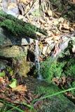 De natuurlijke Lente van het Water Stock Afbeelding