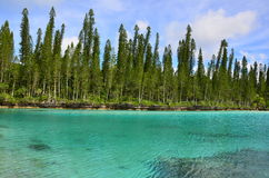 De natuurlijke pool van Baie Oro van het pijnboomeiland van de lagune royalty-vrije stock fotografie