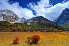 De natuurlijke reserve van Ding van Ya Royalty-vrije Stock Foto